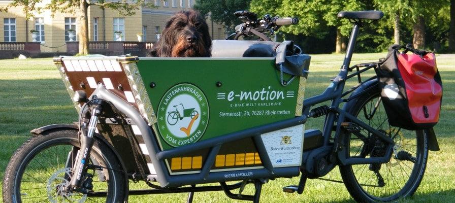 Ein Hund sitzt in einem Lasten e-Bike